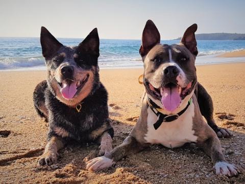 https://www.visiondogtraining.com.au/wp-content/uploads/20190321_071533-2-480x360.jpg
