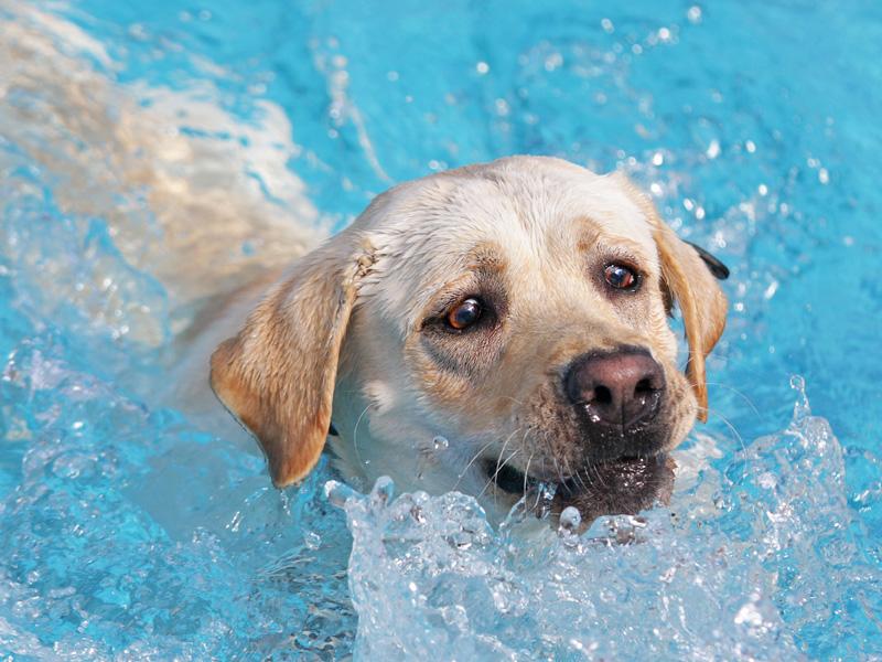 dog splashing in water
